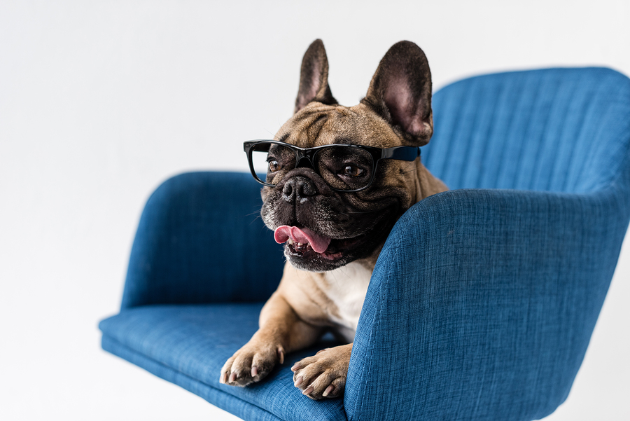How to Recognize, Treat and Manage French Bulldog Eye Problems