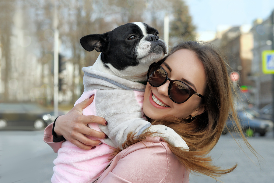 What is the Average Lifespan of a French Bulldog? (2020 Update)