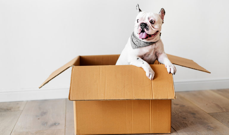 10 Essential French Bulldog Accessories For Your Favorite Companion