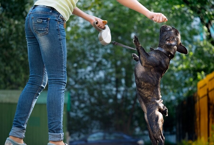 The 8 Best French Bulldog Treats That Will Have Your Pup Doing Backflips