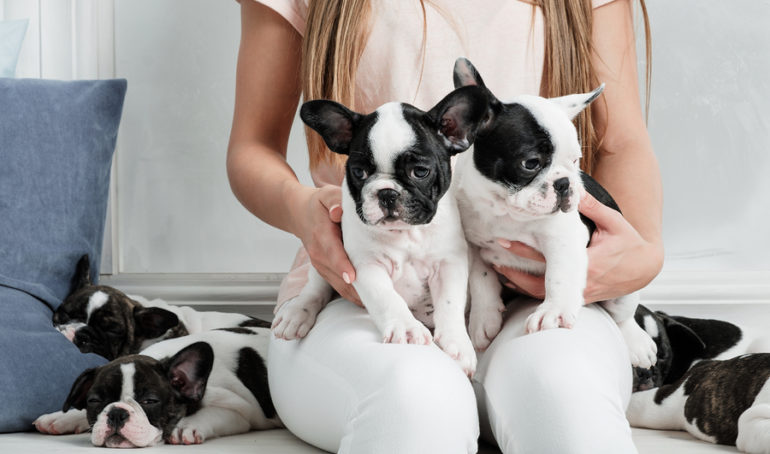 The Top 300 French Bulldog Names For Male and Female Frenchies