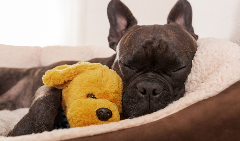 How much do French Bulldogs sleep?