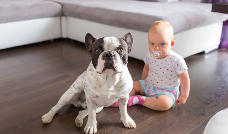 Are French Bulldogs Good With Children?