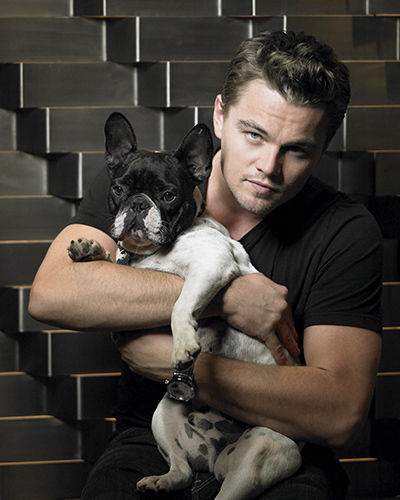 Celebrities with French Bulldogs Leonardo DiCaprio