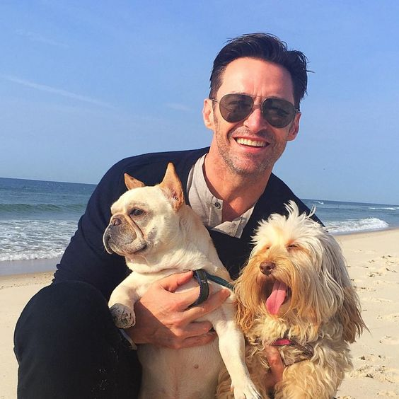 Celebrities with French Bulldogs Hugh Jackman