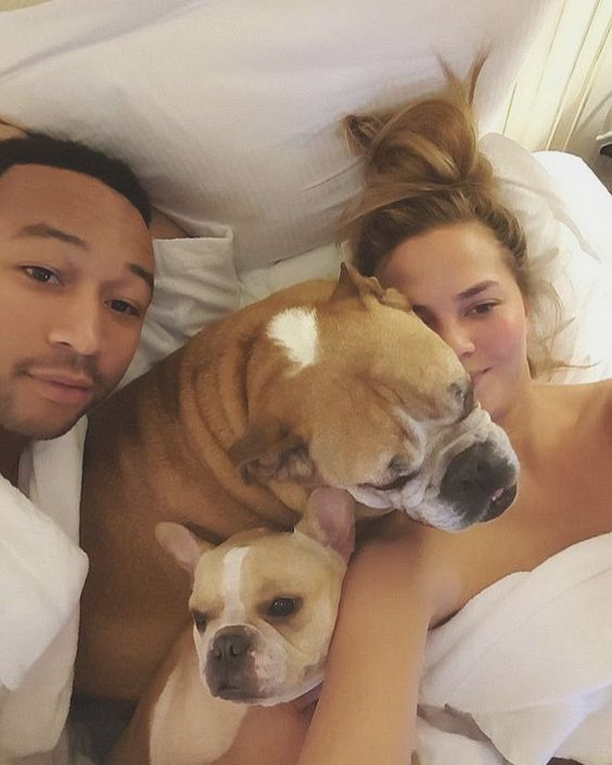 Celebrities with French Bulldogs John Legend and Chrissy Teigan