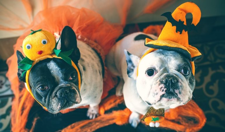 9 Must-Have French Bulldog Halloween Gifts and Accessories