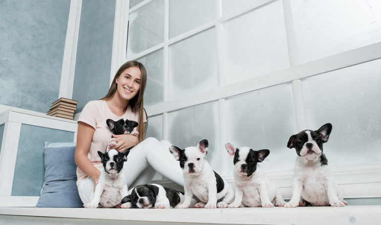 How to Find a Reputable French Bulldog Breeder