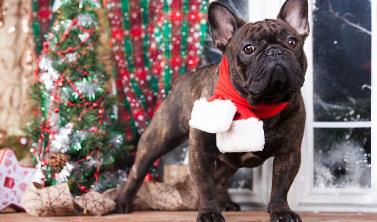 7 Eye-Catching French Bulldog Christmas Decorations