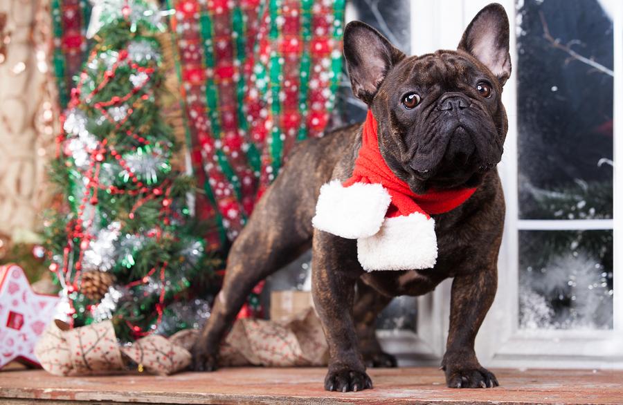 7 Eye-Catching French Bulldog Christmas Decorations
