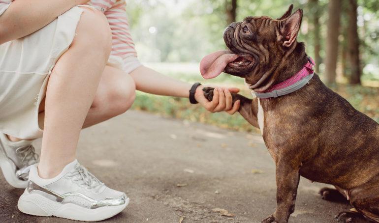 5 Tips For Raising a French Bulldog