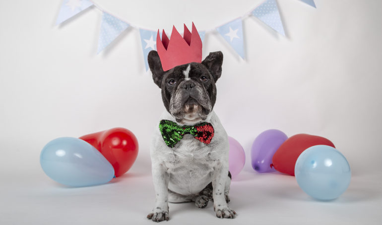 6 Unique French Bulldog Party Supplies to Wow Your Guests