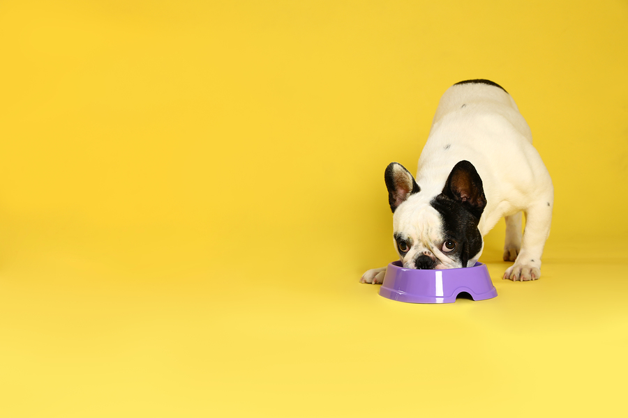 Looking For French Bulldog Kibble? Read This First